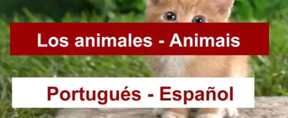 los-animales-en-portugues