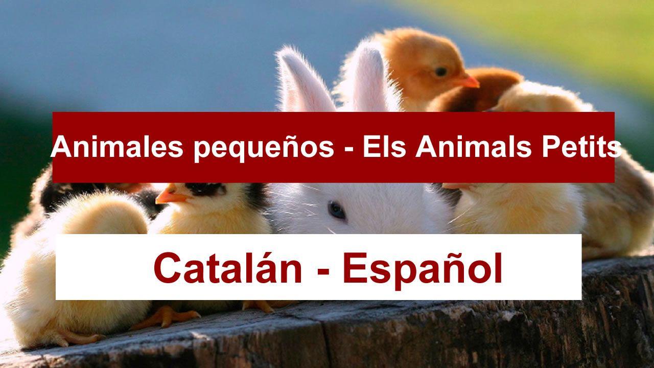 animales-en-catalan