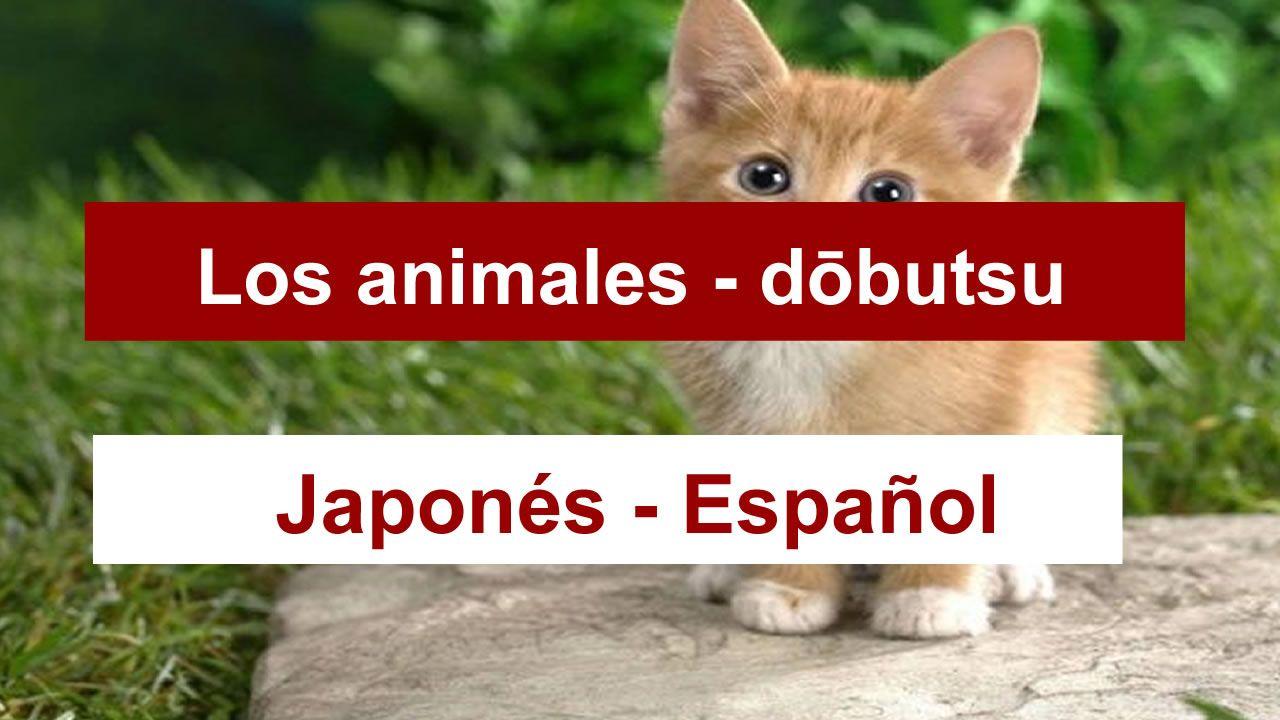 los-animales-en-japones